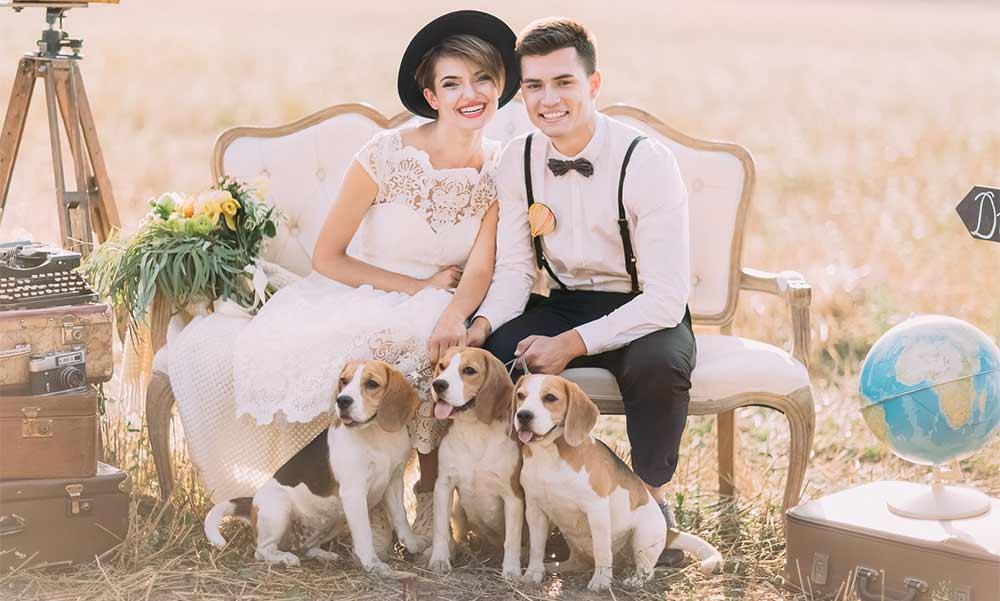 Chiens sur des photos de mariage